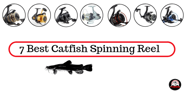 Best Catfish Spinning Reel