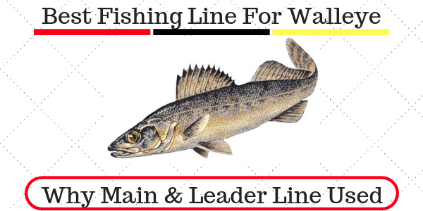 Best Fishing Line For Walleye