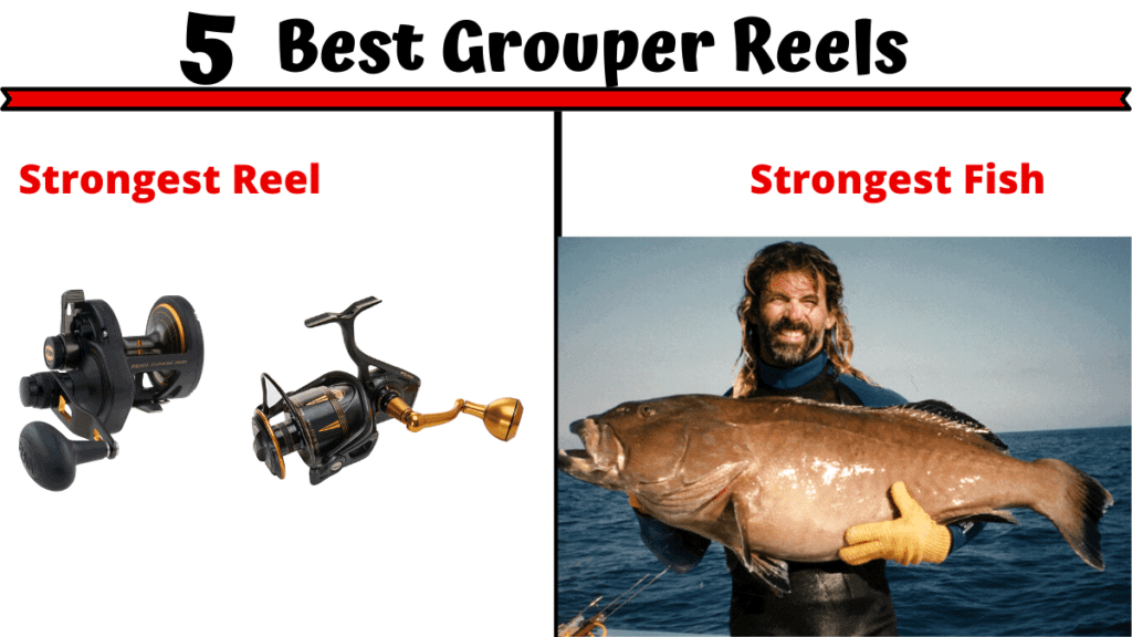 Best Grouper Reels
